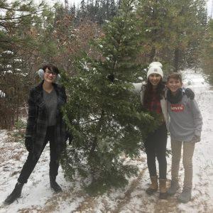 christmas.tree.zac.chan